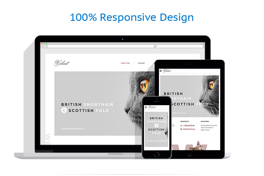 responsive template | Animals & Pets | ID: 3043
